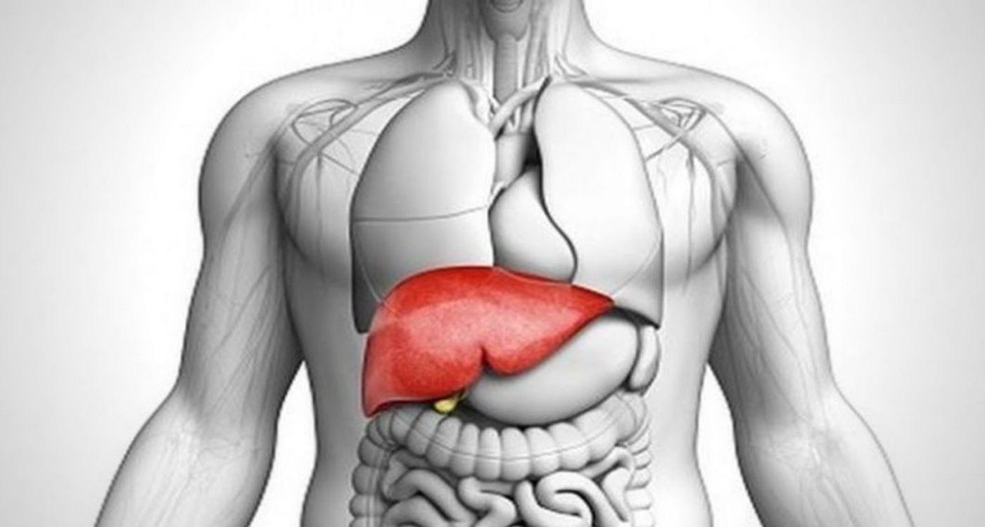liver benefits